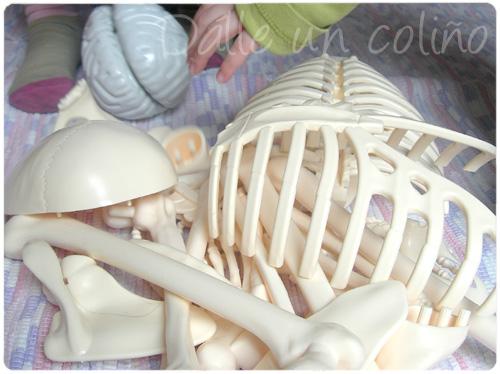 TEMA: Anatomía