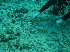 Picking up the big starfish