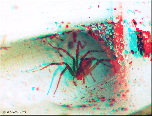 3D Photo spider red and cyan
