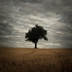 LONELY TREE (Lars Kehrel) Tags: sky tree field k square landscape corn cornfield pentax d grain feld dramatic himmel lars 200 lonely landschaft baum korn einsam kornfeld quadrat quadratisch grainfield einsamer 200d k200 quadrate dramatisch k200d kehrel
