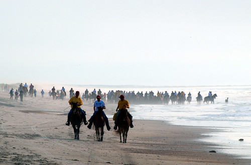 Horses Coming Up the Beach