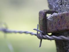 Rusty fence #33