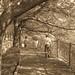 町田樹 画像97
