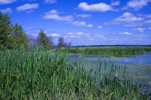 WetlandEmiquon08292009JGWard_MG_9025