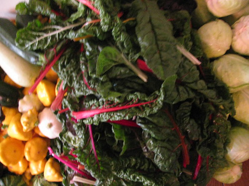 squash chard cabbage