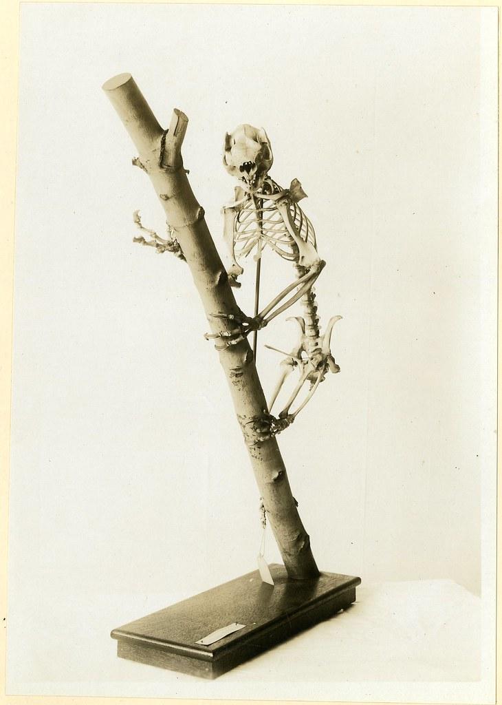 Morbid Anatomy: October 2009