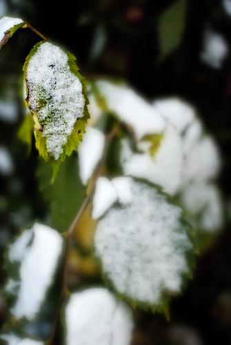 leafsnow