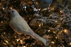Snowy White (Purple Palindrome) Tags: christmas decorations light white snow bird oklahoma store snowy dove christmastree explore christmasdecorations tulsa christmaslight tulsaoklahoma whitedove flickrgolfclub savorychef