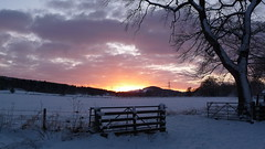 Wintry Sunset (Tracey Paterson) Tags: winter sunset snow tree fence landscape scotland highlands scenery gate inverness