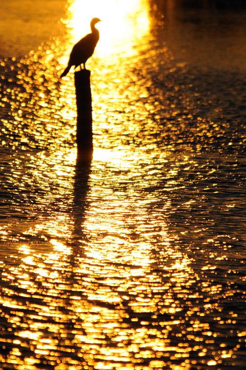 sunshine_0160