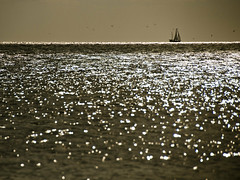 Sailing the Atlantic Ocean (Marie-Marthe Gagnon) Tags: ocean light sea water birds marie sepia boat sailing marthe monotone 150 100 bahamas 35 muted subtle gagnon ruleofthird posterproject bej flickrchallengegroup flickrchallengewinner inspiredbyyourbeauty mariegagnon mariemarthegagnon mutedsubtlecolours