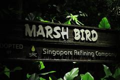 030310 - day 3 - night safari singapore zoo (93) (nate.cho) Tags: zoo singapore singaporezoo nightsafari