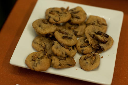 """Chocolate chirp cookies"" with crickets"