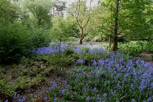 beautiful blue flowers in forest