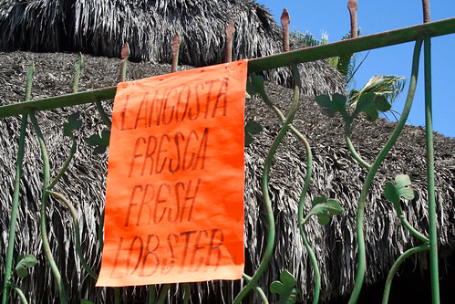 Todos Santos - Langosta Fresca - Fresh Lobster