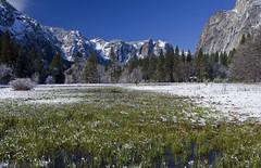 Spring Meadows (Darcy Richardson) Tags: california park blue sky usa snow mountains america canon spring meadow national valley yosemite melt yosemitenationalpark 50d
