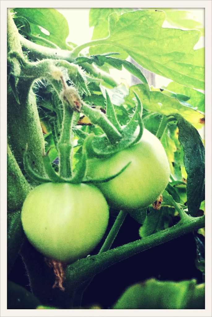 My Maters #crossprocess
