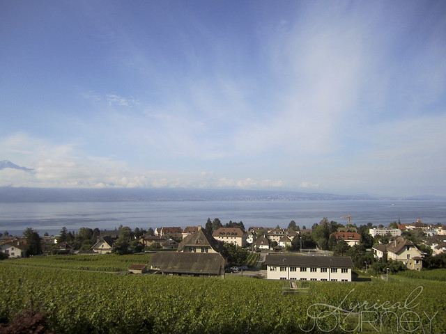 View - Vineyard, Lake, Sky