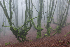 Guipúzcoa. 2016. (Jose_Pérez) Tags: naturaleza color nature contraste niebla fog winter invierno frio cold