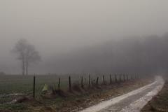Eifel Mist (Netsrak) Tags: forst landschaft natur nebel wald fog forest mist nature woods eifel rheinbach nordrheinwestfalen deutschland de