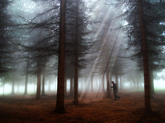 Uros Petrovic - Walking Through Magical Forest (Uros Petrovic) Tags: trees light man uros fog pine forest magic serbia pines rays petrovic srbija worldthroughmyeyes sokobanja