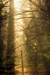 Remastered Week Day 2 (Michelle in Ireland) Tags: trees light sunlight mist misty fog fence sticks haze edited branches foggy hazy twigs pouring lightroom themeweek anawesomeshot remasteredweek