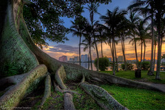 Time-lapse Tuesday - Banyon on the bike path in Palm Beach (MDSimages.com) Tags: world park travel usa tree bike skyline architecture digital america photography evening blog media cityscape unitedstates natural florida path south perspective july