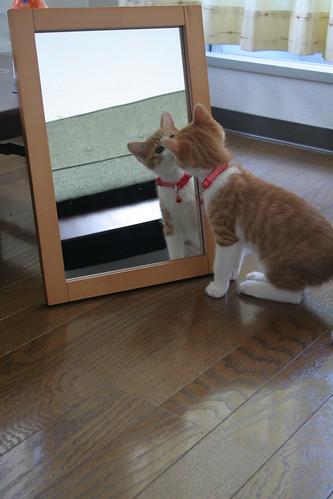 Mirror & cat