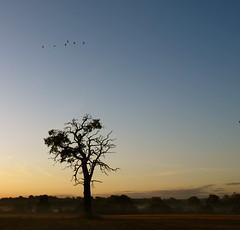 misty morning - tree and birds (peet-astn) Tags: mist tree birds dawn alba buckingham nebbia albero platinumphoto yourcountry