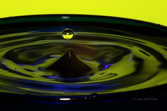 We Have Liftoff (dlsteele01) Tags: pictures abstract color art water colors beauty closeup canon reflections wonder drops cool whimsy artistic photos pic abstracts waterdrops closeups awesomeshot flickrsbest anycoloryoulike anawesomeshot ultimateshot flickrdiamond coloursplosion colorsplosion flickrestrellas flickrsestrellas flickrlovers colorsinourworld colorinourworld colourinourworld dlsteele01 greatshotss vipveryimportantphotos vividstriking selectbestfavorites