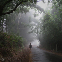 Morning walk (NaPix -- (Time out)) Tags: road morning mountain 6x6 nature fog trek walking square landscape asia walk spot hike bamboo vietnam explore trail southeast sapa hmong tms thespot 500x500 tellmeastory explored specialpicture infinestyle napix winner500