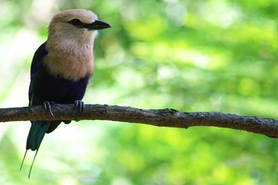 bird at African Waterfall Aviary
