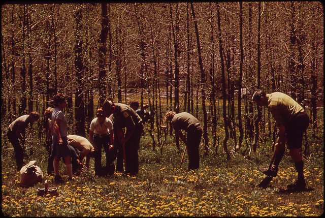 Citizen Volunteers Work with United States Forest Service Personnel to Plant Hundreds of Seedlings to Replace the Native Aspens That Have Been Dying of a Root Disease The Place Is the Very Popular Maroon Lake Campsite Twelve Miles North of Aspen 05197 by The US National Archives