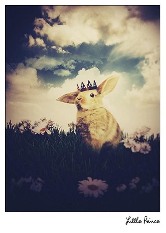 ThisYearsGirl Bunny Prnce