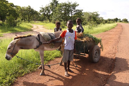 Donkey Wagon #2. Near Navrongo, Ghana.