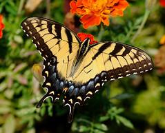 _DSC5291 (pnther60) Tags: backyard roanoke floraandfauna