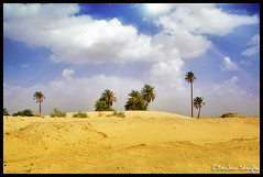 Beaches with no Seas ! (Bashar Shglila) Tags: trees sky sun clouds landscapes interesting with desert sony taken palm rays sands libya libyen   lbia  libi  daraj  libiya liviya matres libija  dschx1    lbija  lby libja lbya liiba livi