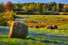 Autumn Hay Harvest, Maine (Greg from Maine) Tags: morning autumn trees fall field sunrise landscape golden countryside frost maine sce