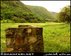 Wadi Darbat (Shanfari.net) Tags: flowers plants nature al natural ericsson sony greenery cave oman salalah  sultanate dhofar  khareef  haq      taqah     governate  madeinat  darbat taiq c905  raythut