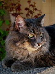 A Marley Moment (joecrowaz) Tags: arizona cats pets animals olympus e500 prortrait supershot zuiko1445 bestofcats kittyschoice catmoments vosplusbellesphotos boc1009 ppn200911