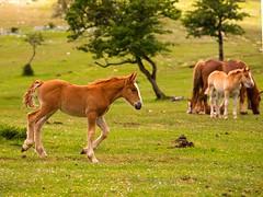 Moxala Legairen, 2009 061 (Joxefe Diaz de Tuesta) Tags: horse primavera nature canon cheval spring mare country natura blonde alava basque printemps euskalherria colt euskadi paisvasco araba zaldia udaberria moxala behorra josefelixdiazdetuesta atauri legaire opakualegairearabaeuskadi2009