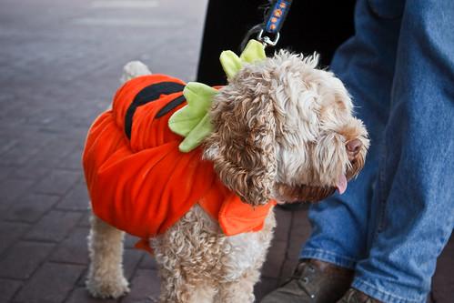 Drifter as a Pumpkin!