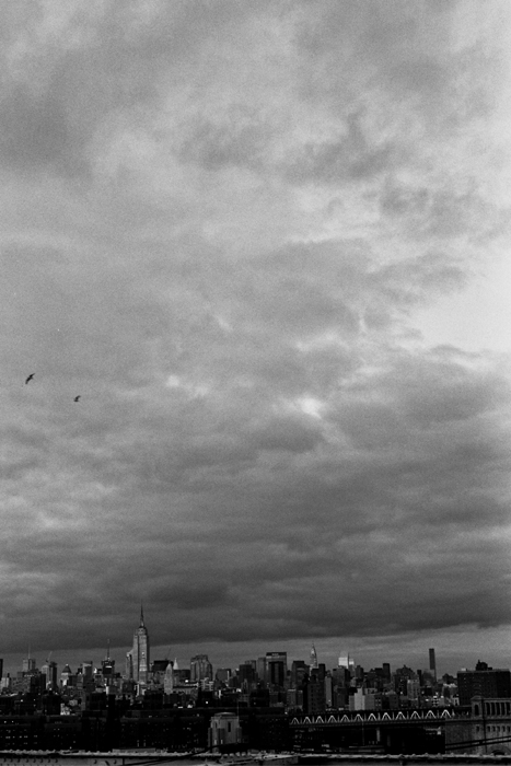 city_birds