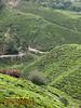 The BOH Tea Plantation at Cameron Highlands