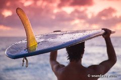 A young man walking on the beach with his surfboard during sunset, at Rocky Point, on the north shore. (Sean Davey Photography) Tags: seandavey finephotographyart photographersfineart surfnorthshorepicturessurferssurflifestylesurfersphotographssurfpeoplebeachphotographtropicalpicturestropicalphotostropicalphotographsimagessurfbeachsceneryfinephotographyartphotographybeachpeoplesilhouetteshawaiiansurfphot horizontalsurfersnorthshoreoahuusa