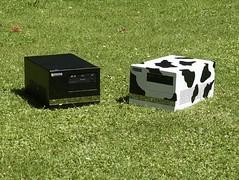 Multimedia Cow auf der Wiese