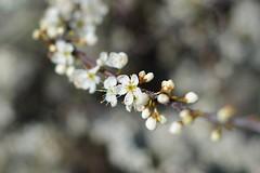 Summer flowers (Åge Johansen) Tags: flower norway norge dof pentax grimstad austagder k200d pentaxsmcm50mm17 kalvehagneset