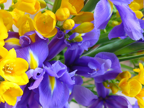 orquídeas plantas