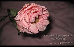 to U .. Betrayal really hurt (waad ali) Tags: