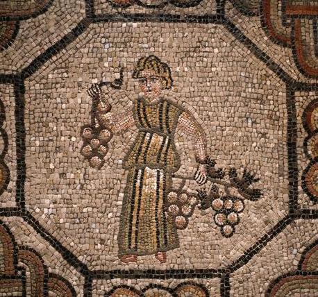 Aquileia uvas